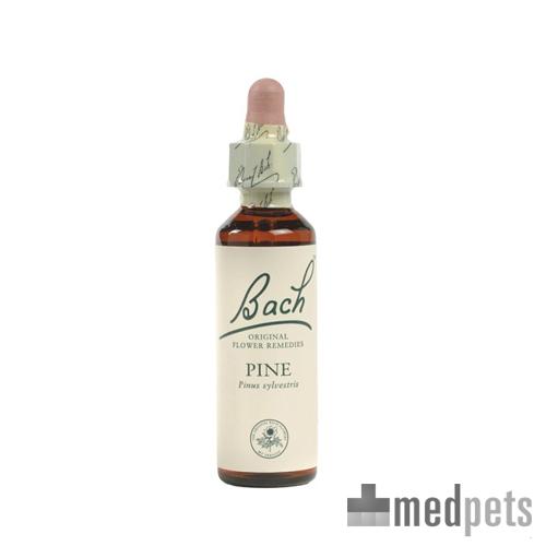 Bachblüten Therapie - White Chestnut (Weißblühende Rosskastanie)