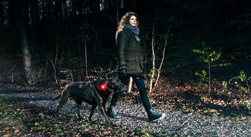 Ist Ihr Hund gut sichtbar im Dunkeln?