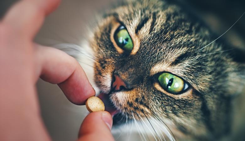 Alles zum Entwurmen von Haustieren