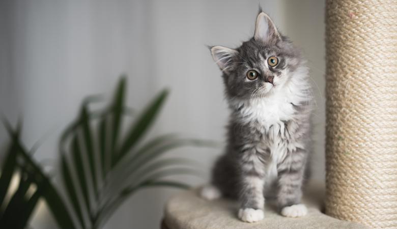Ein Kätzchen zieht ein