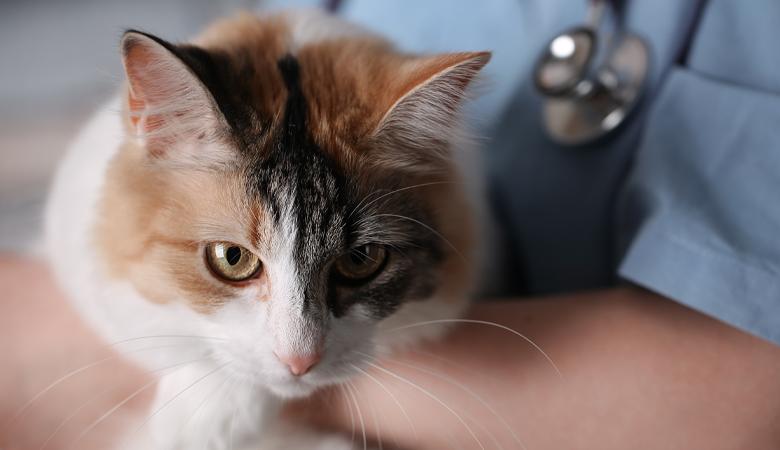 Bandwürmer bei Hund und Katze