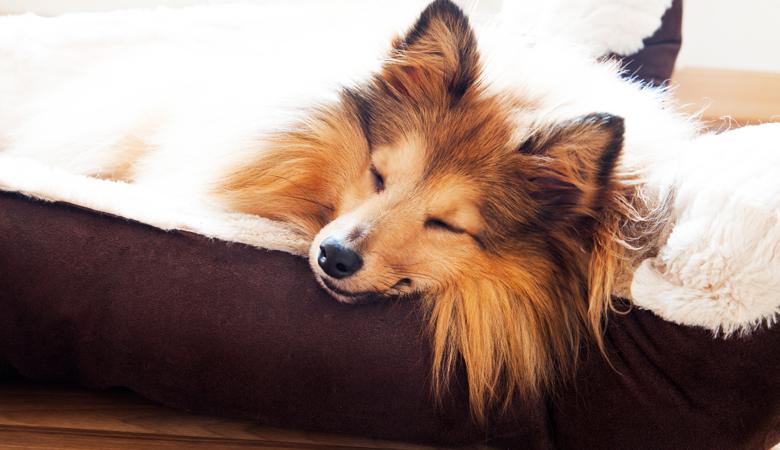 Orthopädische Hundekissen von Beeztees