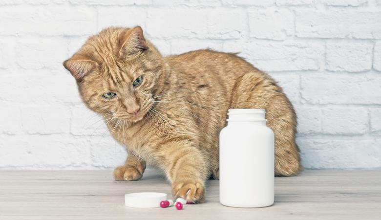 Tipps für die Anwendung von Tabletten, Salben, Halskrausen & Hilfsmittel