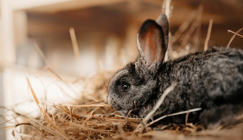 Kaninchen Stubenrein